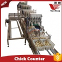 Chick Counting System